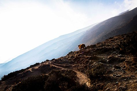 Outside Material | Everest Base Camp Trek | Mountain Shades with horse